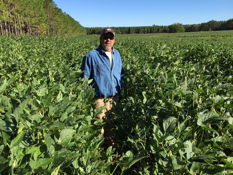 Forage soybeans for grazing, hay and silage - Progressive Forage